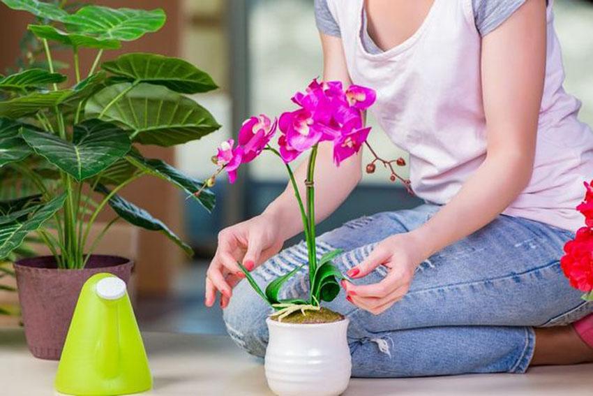 5 простих порад з догляду за домашніми рослинами » Корисні поради 9bbdcfbfa4197