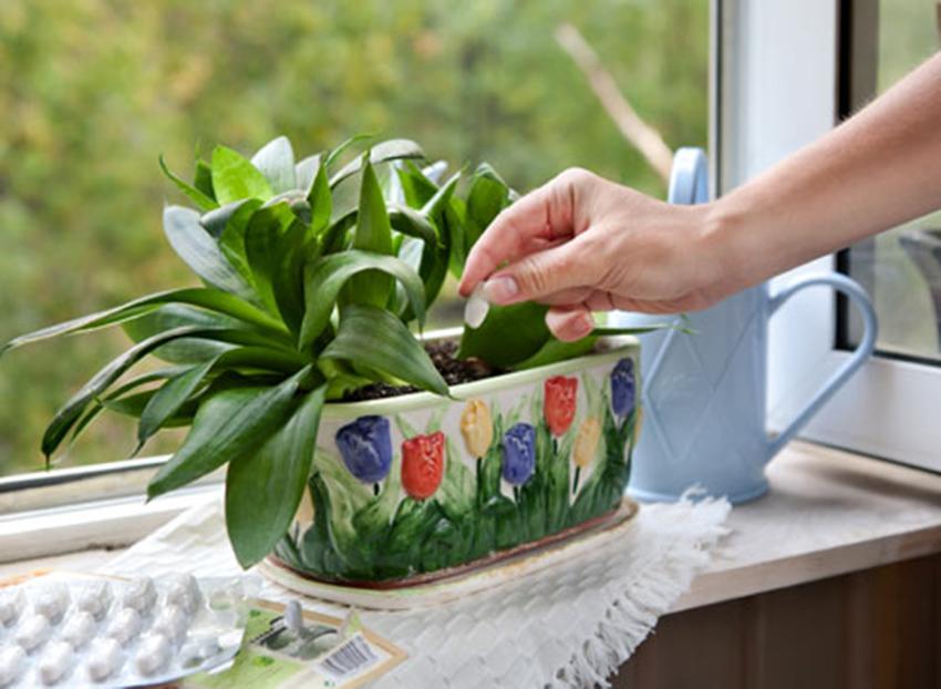 Картинки по запросу Добрива для рослин: що варто знати?